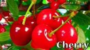 讓我們學習英語中的水果名字!在朋友之后重復并且玩得開心!