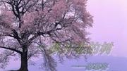 一棵开花的树朗诵配乐 经典诗歌朗诵