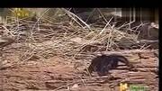 世界上最毒的十大毒蛇排名,毒性排第一的是什么蛇?