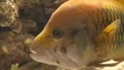 海底總動員(片段)小丑魚尼莫被人類捕獲