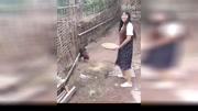 俺家的公鸡总是看我女友不顺眼,只要她来,就啄她