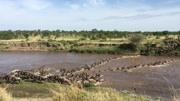 坦桑尼亚-塞伦盖蒂国家公园 高清