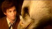 系列電影:神奇動物在哪里