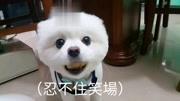偷吃澎湖炸花技丸-美娘电影中国app的情趣内衣情趣中图片