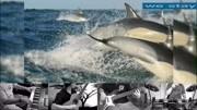CCTV-動物世界不敢播放的短片!