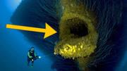 4種恐怖的生物!巨型紅水蛭生吞70厘米的蚯蚓!
