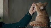 Vimeo 花絮《流浪貓鮑勃》現實生活中的鮑勃