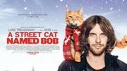 流浪貓鮑勃,影片中的淚點與笑點恰到好處,劇情走勢也不負眾望!