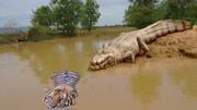 巨蟒大战恐鳄 结局片段 恐怖惊险