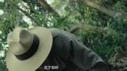 怒晴湘西:陳玉樓掉下懸崖,是被什么送上來的?不是蜈蚣而是它