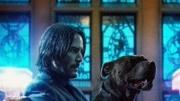 《疾速追杀3?#21453;?#29399;狗坐出租 顶着1400万美元的赏金 要保证狗安全