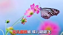 醉蝴蝶歌曲谱_酒醉的蝴蝶歌曲图片