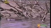 全球十大最恐怖的蟒蛇,泰坦蟒最長達9米,森蚺竟然擠不上榜