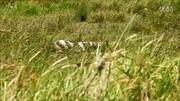 东非野生动物大迁徙:塞伦盖蒂大草原的马赛