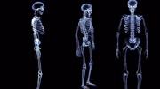 50秒带你看《人类退化史》!