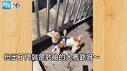 """狗狗搞笑;为防止小狗""""疯狂逃家"""",超聪明主人""""一招立马解决问题""""..."""