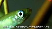 美女抓到一条远古食人鱼,放在实验室研究,却不知大祸临头!