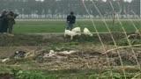 張藝興錄制《極限挑戰》第四季,居然對綿羊狂尬舞,綿羊一臉嫌棄躲開