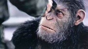 未來世界爆發猿流感,人類幾乎滅絕,猩猩趁機統治了地球!