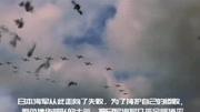 就喜歡看二戰美日太平洋戰爭,打的越激烈越好!