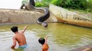 蛇斯拉,堪比泰坦巨蟒般的存在