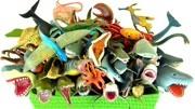 認識不同種類的小恐龍和小動物
