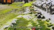 """有""""毒""""吧?俄羅斯小鎮竟下起綠色雪,背后真相令人痛心!"""