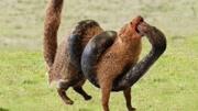 動物世界 蛇王爭霸