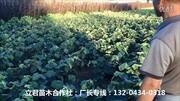 立君苗木合作社:专业的果树苗、绿化苗、葡萄树苗、等苗木产品生产商