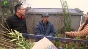 农村小飞:买的葡萄树苗养不活,有经验的农民告诉他是骗人的
