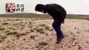 探索沙漠中自然生长的多肉植物,高达上千种,植物庞大堪称奇迹!