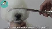 泰迪萌系圆头小耳朵修剪视频  摩登宠物美容教学视频