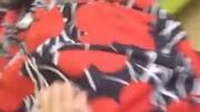 POUCH680 婴儿车 遮阳棚 新款 设计 安装 视频
